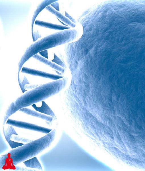 אימון גלי מוח לתיקון וחידוש DNA